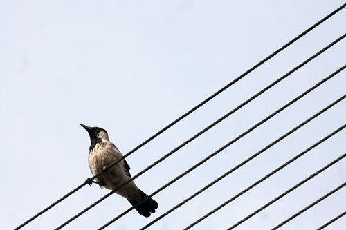 فرصت پرنده نگری در پارک شهر