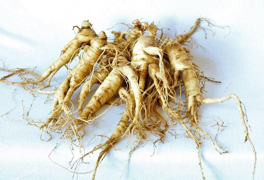 نکته بهداشتی: جین سنگ، محرک گیاهی